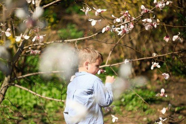 В ботаническом саду в Киеве зацвели магнолии