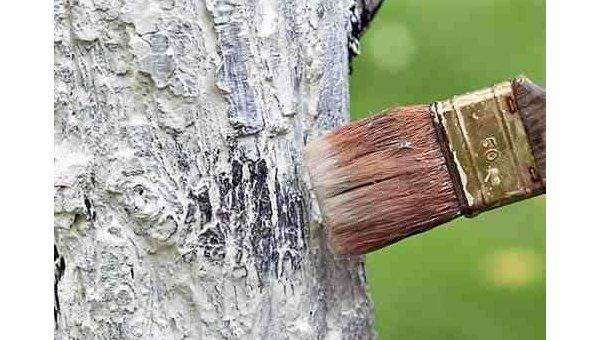 «Долой советские привычки»: вКиеве запретили белить деревья ибордюры