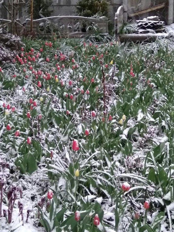 Снег в Лозовой