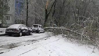 Апрель в Запорожье: падающий снег и поваленные деревья