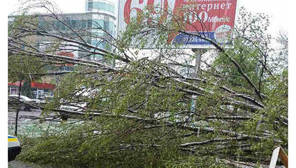 В Днепропетровской области дерево убило женщину