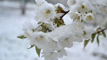 Снег в Кропивницком