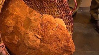 В Китае обнаружили окаменелые яйца динозавров возрастом 70 млн лет. Видео