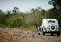 Нашествие крабов на Кубе