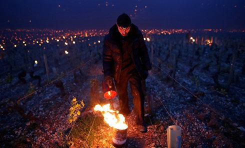 Зрелищные фотографии спасения французских виноградников от заморозков