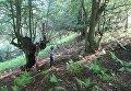 На Закарпатье охотник подстрелил мальчика, собиравшего грибы