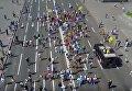 Парад в Киеве легендарной породы джек-рассел-терьер из фильма Маска