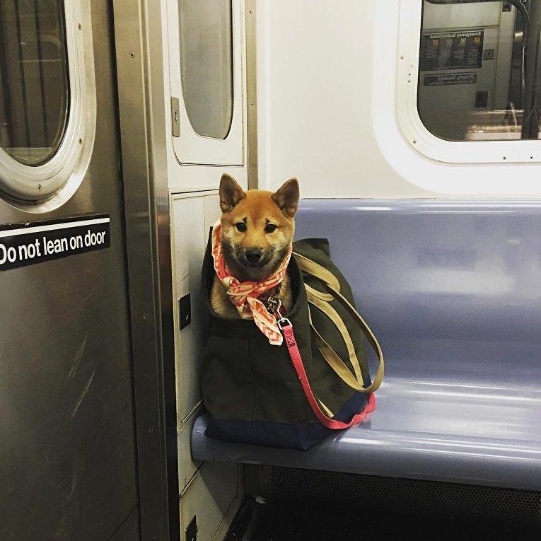Собаки в метро Нью-Йорка
