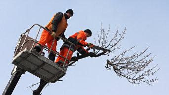 Обрезка городских деревьев