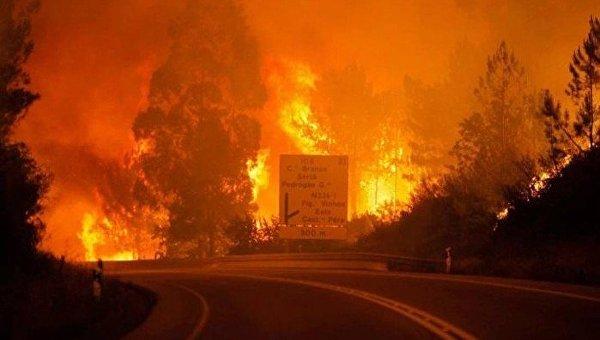 Жертвами лесных пожаров в Португалии стали 19 человек