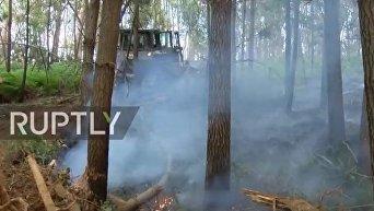 Последствия масштабных пожаров в Португалии. Видео