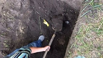 Исчезнувших в Киеве супругов нашли убитыми в Черниговской области