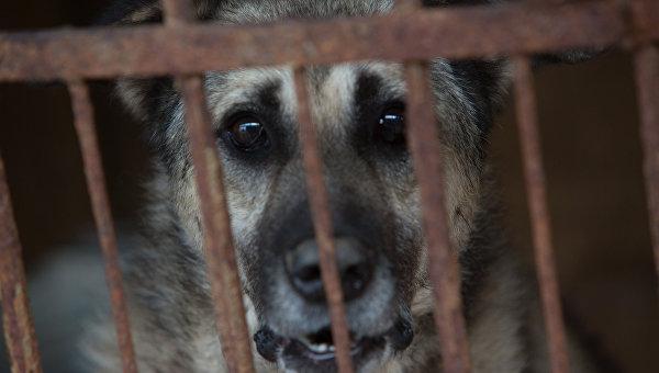 Собака в приюте для бездомных животных. Архивное фото
