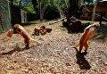 Животные в зоопарке Рима