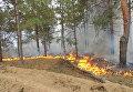 Пожар на территории Чулаковского лесничества в Херсонской области