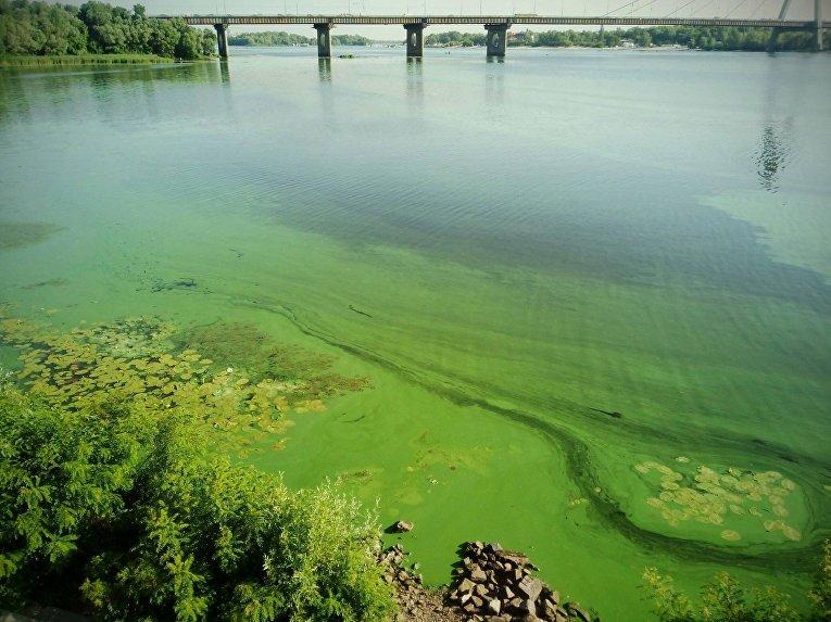 В Днепре позеленела вода