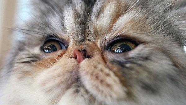 Американцу дали 16 лет тюрьмы за убийство котов