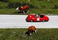 В Австрии состоялся заезд ретро-автомобилей
