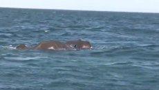 На Шри-Ланке спасли двух слонов, которых унесло в океан. Видео