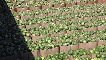 Баржа с 250 тоннами арбузов отправилась из Херсонской области в Киев.