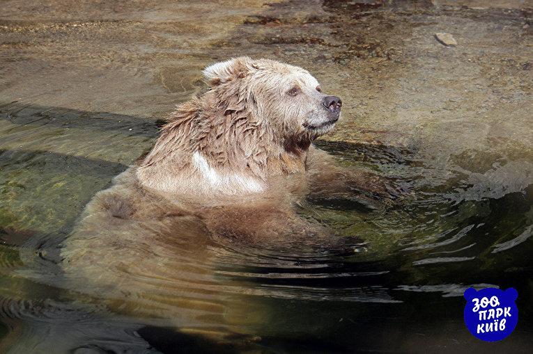 Как спасаются от жары животные в зоопарке