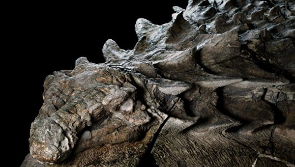 1026455119 Ученые обнаружили «Мона Лизу мира динозавров»