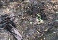 В Киеве мужчина подорвал себя гранатой