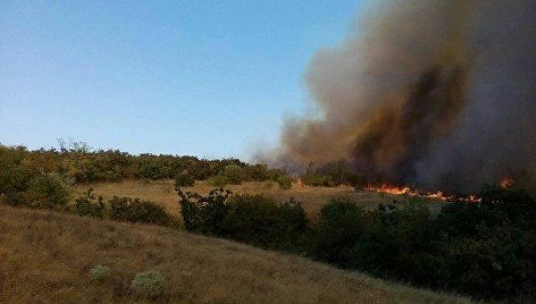 Лесной пожар в Николаевской области