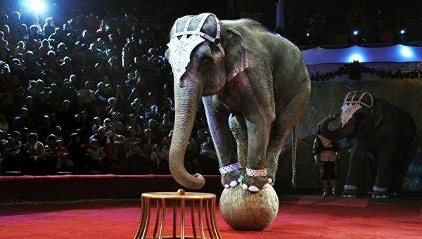 Цирковое представление в Днепре