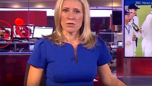 Работник BBC смотрел эротическое кино вовремя прямого эфира