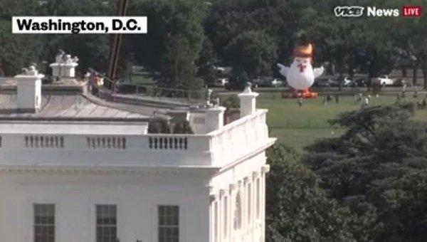 У Белого дома установили гигантского надувного цыпленка с прической Трампа. Видео