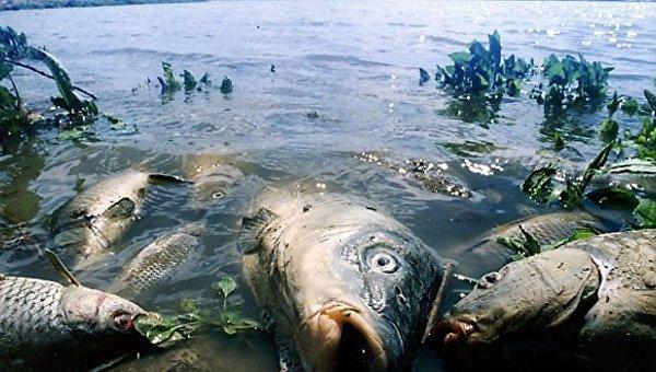 Мор рыбы в Николаевской области