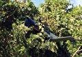 Полицейский вертолет потерпел крушение близ Шарлоттсвилля