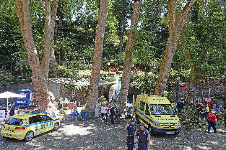 На Мадейре упал 200-летний дуб