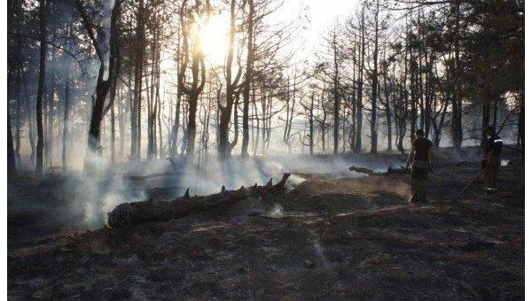 В Запорожье в заповеднике Остров Хортиця спасатели ликвидировали лесной пожар