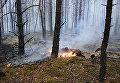 В Житомирской области горит заповедный лес