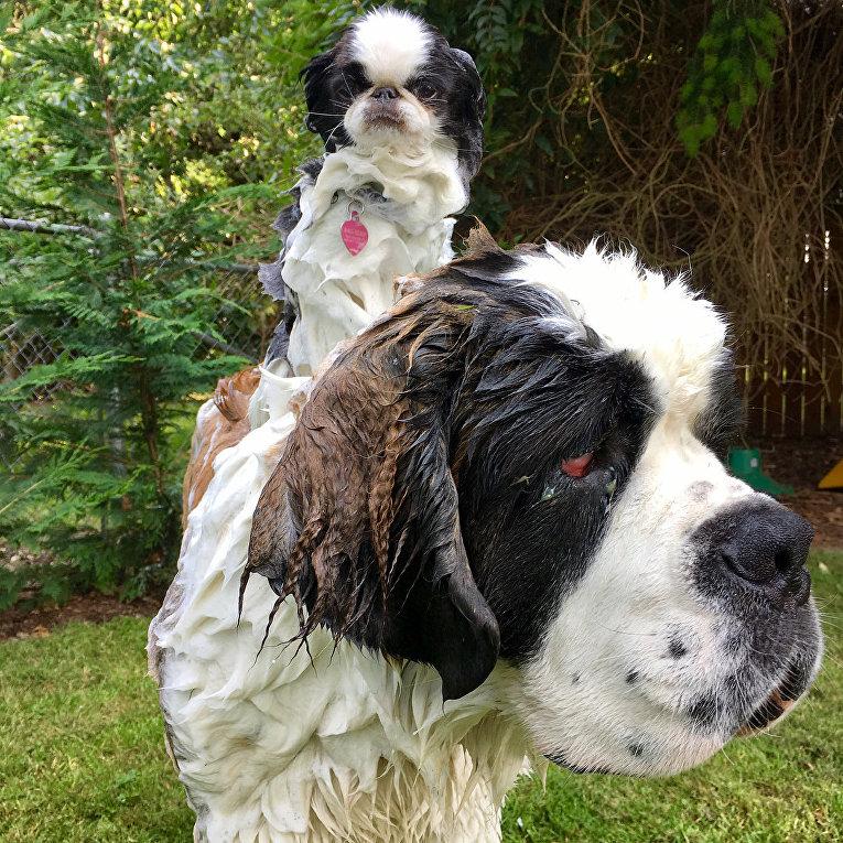 Собаки-путешественники
