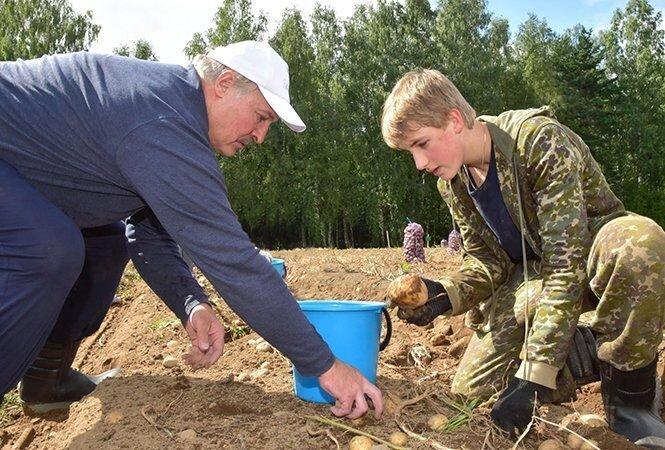 Президент Белоруссии Александр Лукашенко с сыном выкопали на выходные 105 тонн картошки
