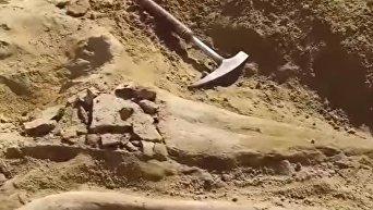 В США на стройплощадке археологи обнаружили кости динозавра. Видео