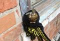 В Запорожской области мужчина во дворе нашел растяжку из гранаты