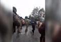 Полиция vs добытчики янтаря. На видео попал момент стрельбы. Видео