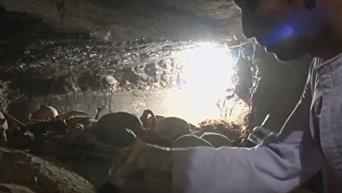 В Египте археологи раскопали древнюю гробницу. Видео