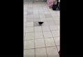 Очевидец: по киевскому супермаркету гуляют пернатые. Видео