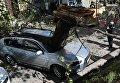 Упавшее дерево разгромило автомобиль депутата Оксаны Юринец в центре Львова