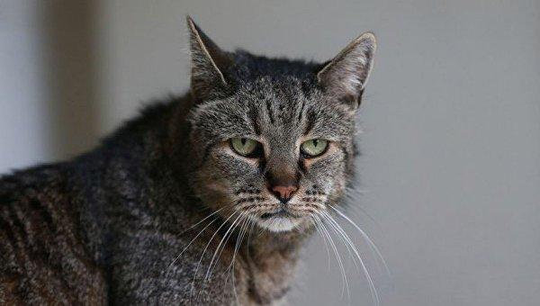 Самый старый в мире кот по кличке Nutmeg