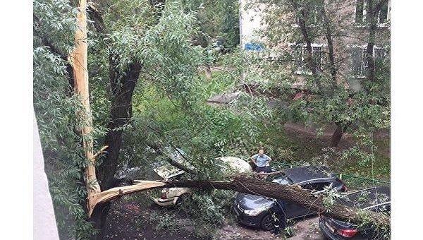 Ураган в Москве повалил деревья