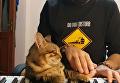 Кот-меломан