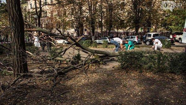 В центре Днепра упавшее дерево убило студентку