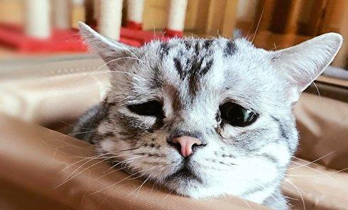 Грустный кот взорвал соцсети