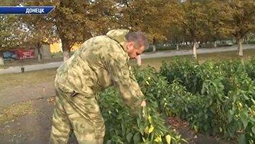В ДНР телеканалы показали министра, на которого было совершено покушение